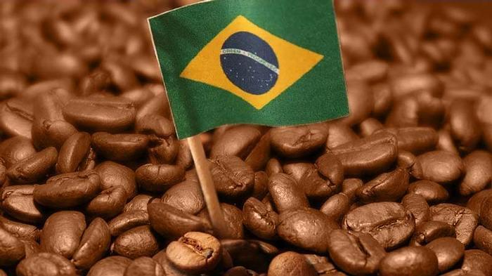Il caffè del Brasile